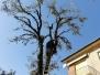 Rušenje i orezivanje stabala